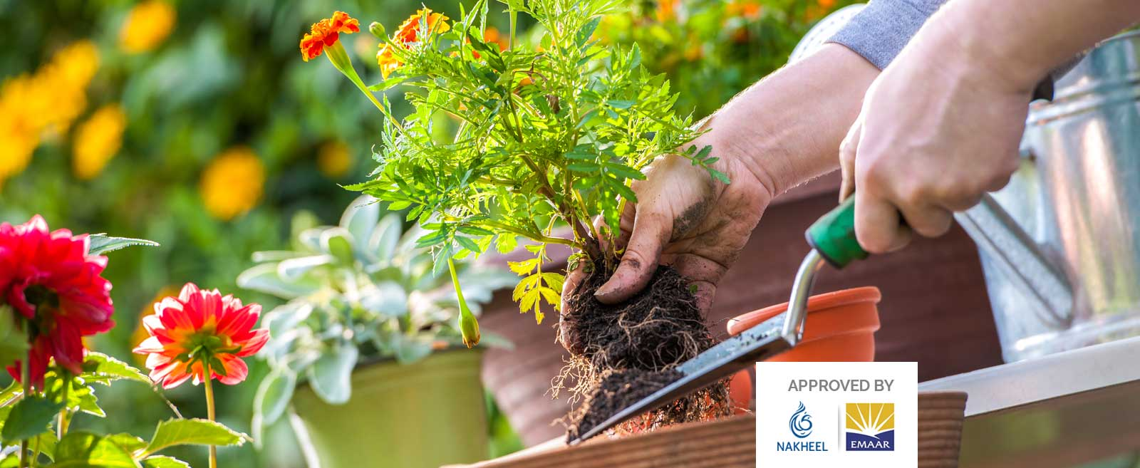 Landscaping and Gardening Services in Palm Jumeirah Dubai